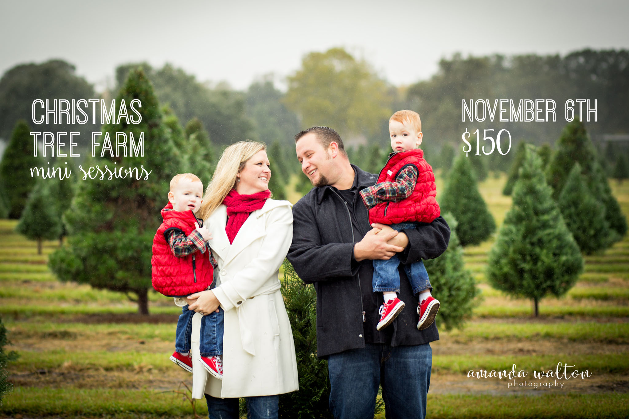 Christmas Tree Farm Photography.Christmas Tree Farm Mini Sessions